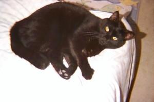 Midnight (Midder), the cat