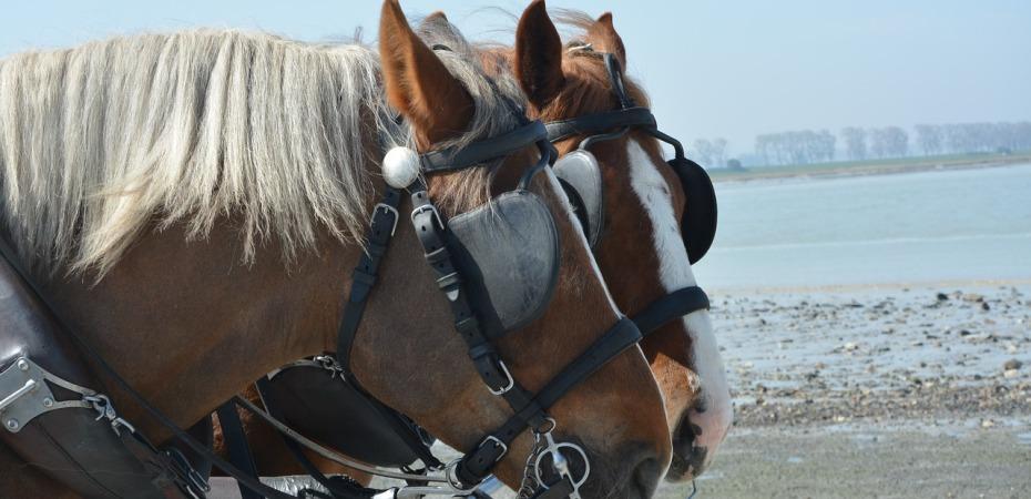 matched horses equally yoked
